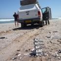 Tourist leftover? Skeleton coast national park.