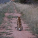 Africat foundation, Okonjima
