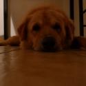 the family dog Elie